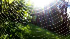 spider-web-in-closeup-photo-1038278