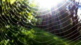 spider-web-in-closeup-photo-1038278